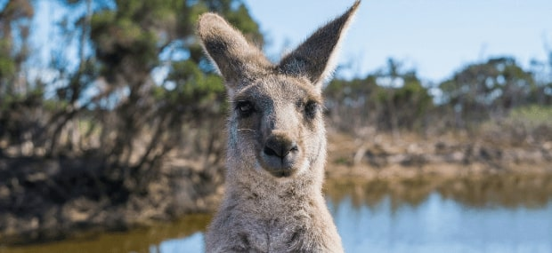Funny Australian (Aussie) words, sentenced and phrases screamed by an international student in Australia. The Aussie slang is funny.